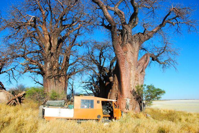 OKAatBainesBaobabBotswana.jpg